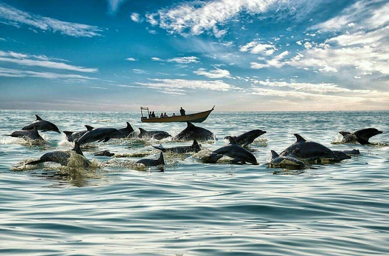 راهنمای سفر به «جزیره هنگام»؛ به میزبانی دلفینها - ایرنا زندگی